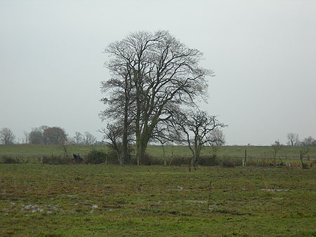 swinemoor-tree-201107.jpg