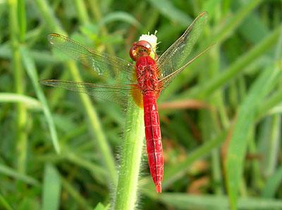 dragonfly3small.jpg