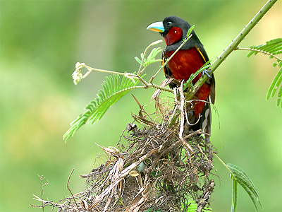 black-and-red-nest.jpg